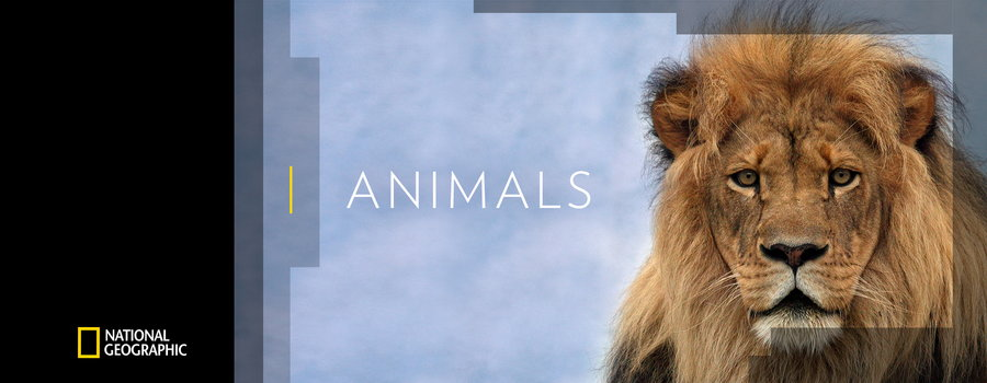 National Geographic Animals