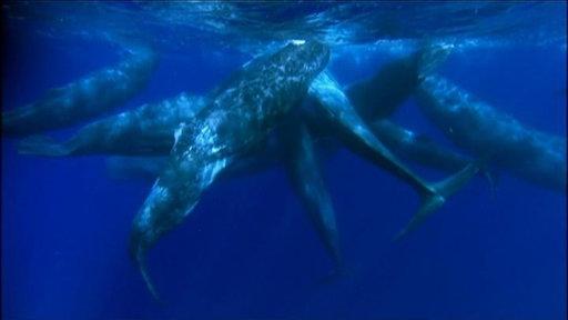 A Sperm Whale Family