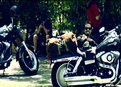 Sons of Anarchy: Before the Anarchy: SAMCRO's New Neighbors