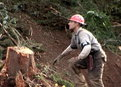 Ax Men: Loggers Under Fire