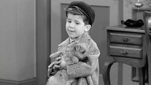 12. Little Ricky Gets a Dog