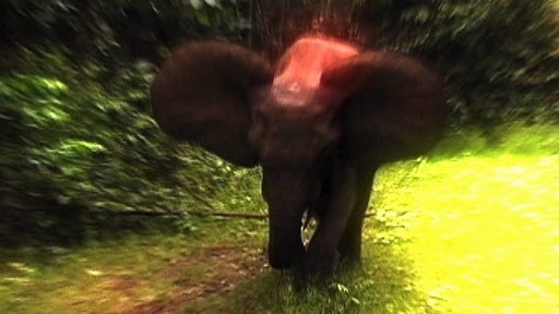 Survival Guide: Elephant Charge