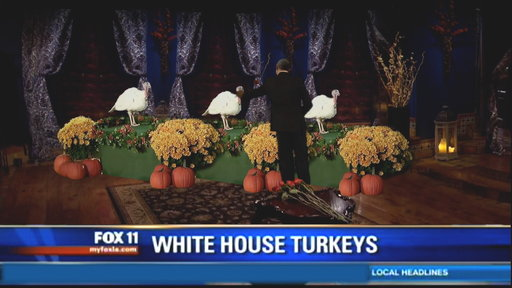 Obama's Turkey Pardon