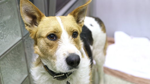Saved Sochi Dogs Arrive in U.S.