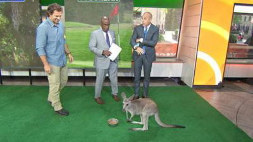 Pythons, Kangaroos from 'Urban Jungle' Invade TODAY