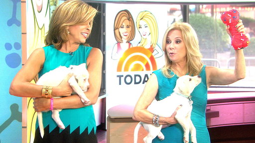 Dog Fight! Kathie Lee, Hoda Have Canine Trivia Battle