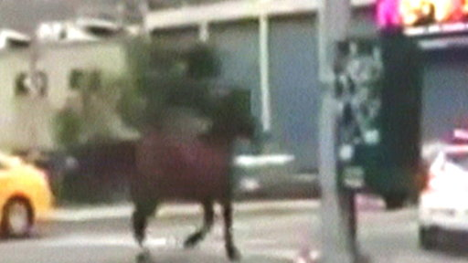Horse Escapes Stable, Trots Through NYC Traffic