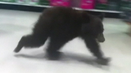 Lost Baby Bear Wanders Through Rite Aid Store
