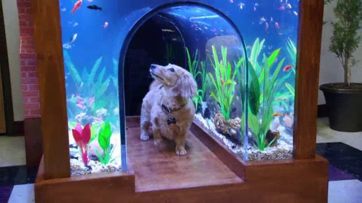 Watch tanked season 7 episode 5 tanks n 39 roses for Fish tank show